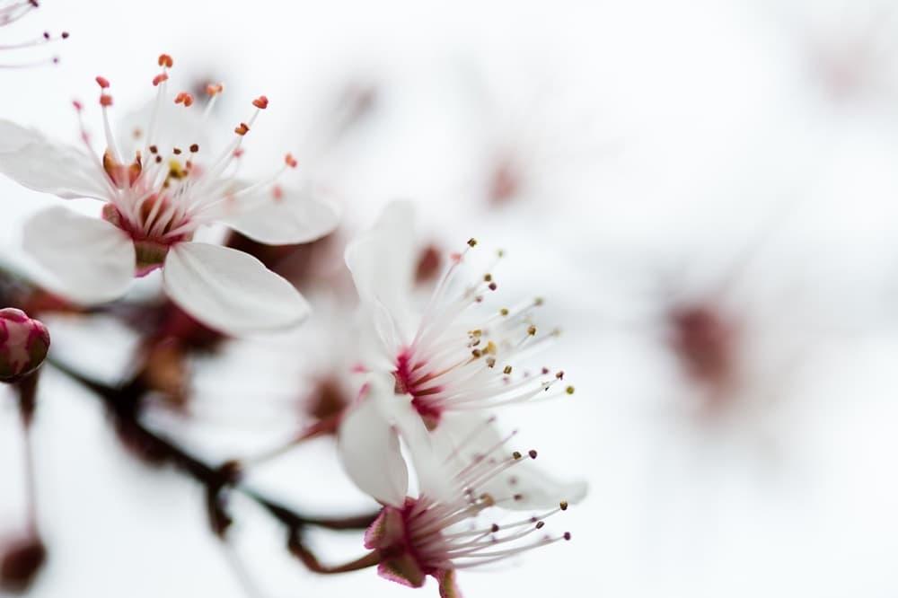 石田三成と真田昌幸を結ぶ姻戚関係。互いの正室が宇多頼忠の娘?,アイキャッチ画像