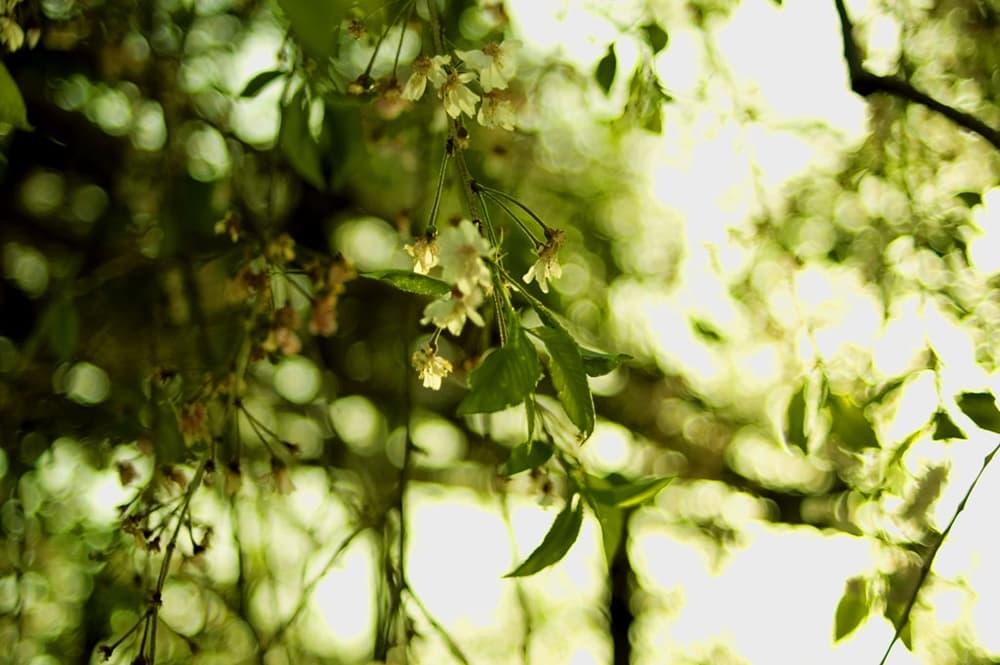 豊臣秀次事件。豊臣政権に亀裂が生じ、関ヶ原の戦いの一因?,アイキャッチ画像
