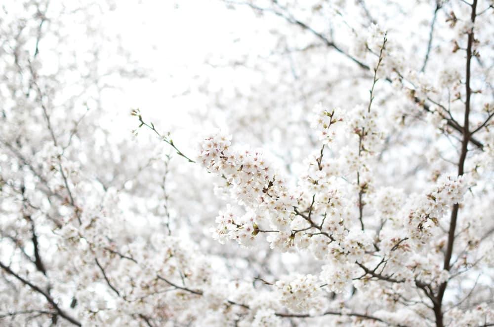 太閤・豊臣秀吉の死因。毒殺?それとも脚気・大腸癌・腎虚あたりか?,アイキャッチ画像