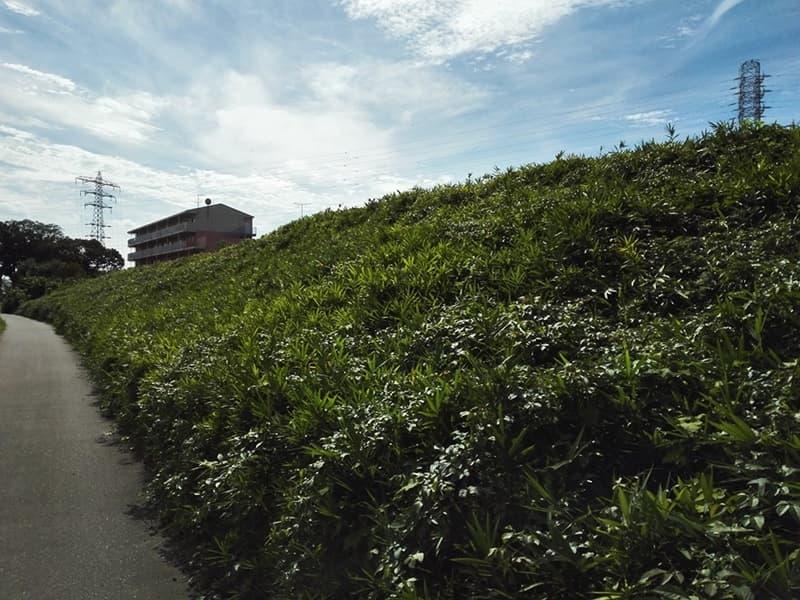 石田堤史跡公園。石田三成が忍城水攻めのために築く、埼玉県鴻巣市,画像12