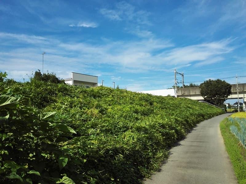 石田堤史跡公園。石田三成が忍城水攻めのために築く、埼玉県鴻巣市,画像05