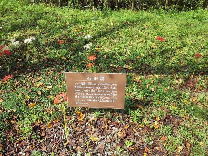 忍城・丸墓山古墳。忍城の戦いは日本三大水攻め、黄色い彼岸花,画像10