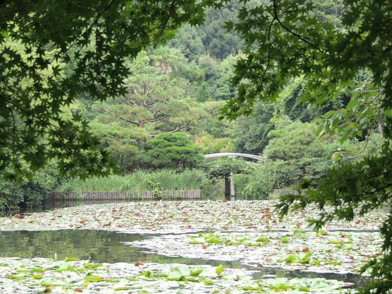 千姫(天樹院)。秀頼の正室。大坂夏の陣後は本多忠刻の正室,画像01