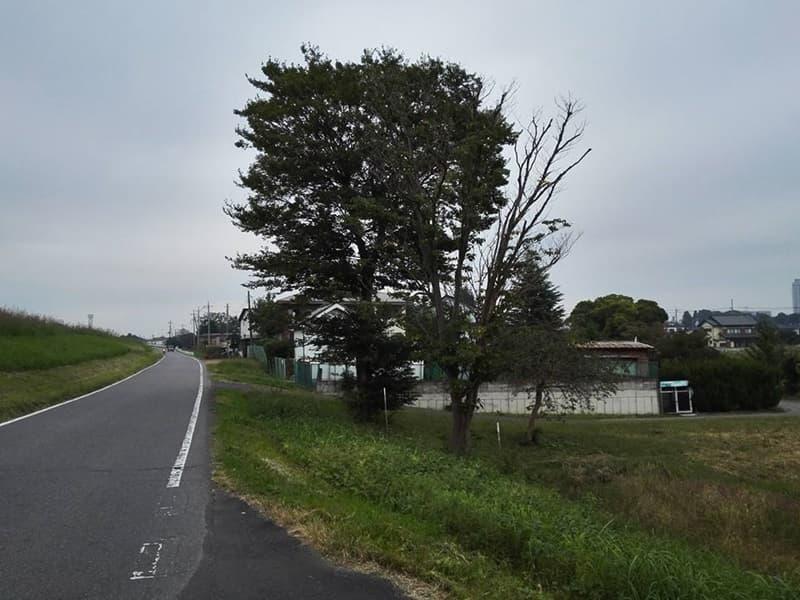 古河城跡・古河城本丸跡。周辺には鷹見泉石記念館・永井路子旧宅も,画像0104
