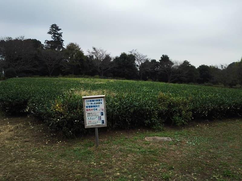 古河公方館。古河御所・鴻巣御所とも呼ばれ、大半は古河総合公園,画像0103